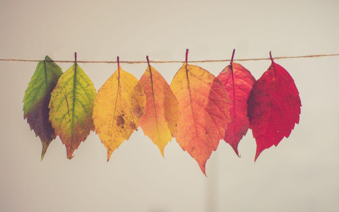 Stages vacances d'automne
