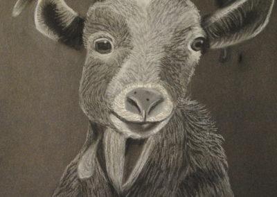 chèvre manon